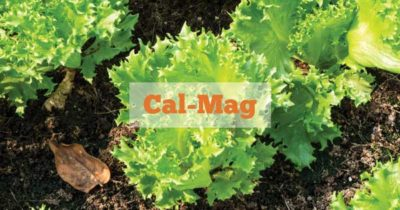 Botanicare Cal-Mag