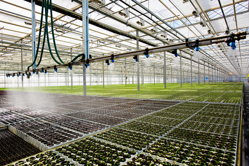 Berry Plastics 1yr Nursery Greenhouse film Clear 6mil